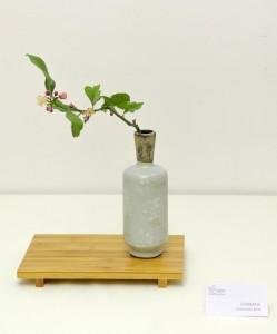 Chabana (Flor para la ceremonia del té)